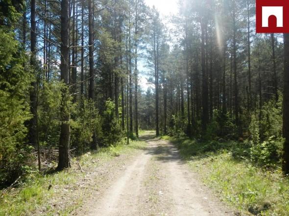 Müüa maa Kivila, Paatsalu küla, Varbla vald, Pärnu maakond